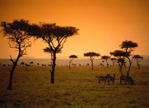safari kenyan
